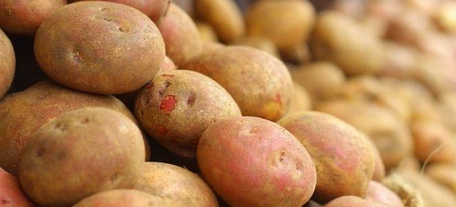 Способы повышения урожайности картофеля