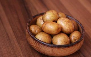 Сорт картофеля Жуковский – характеристики и свойства