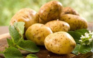 """Немецкий сорт картофеля """"Королева Анна"""""""