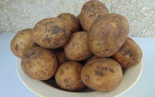 Регламент на продовольственный картофель