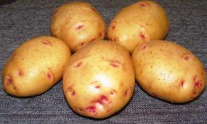 Неизвестные сорта раннего картофеля