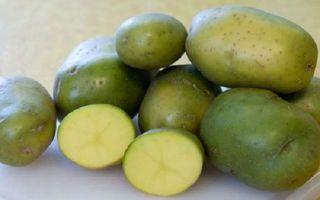 Можно ли кушать позеленевший картофель