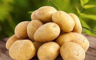 Как влияют на урожайность семена картофеля