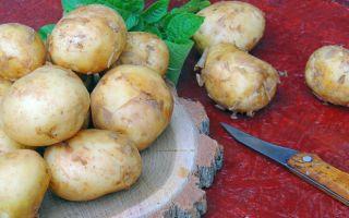Гранада немецкий сорт картофеля
