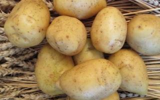 Описание картофеля сорта Гала