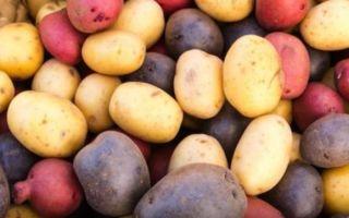 Как хранится картофель в разных условиях