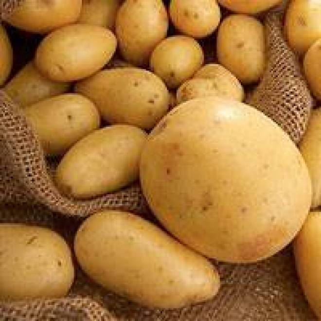 россыпь картофеля