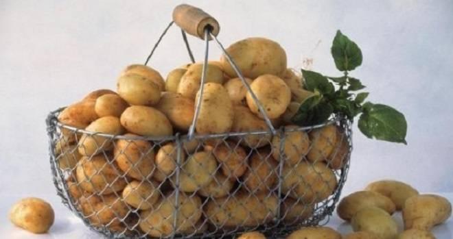 молодой картофель в корзинке