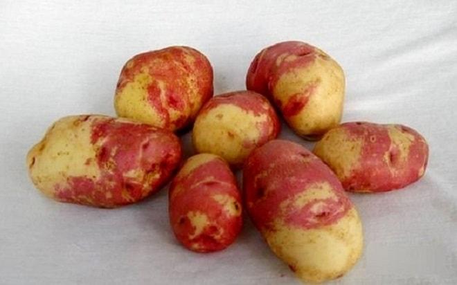 сорт картофеля иван да марья