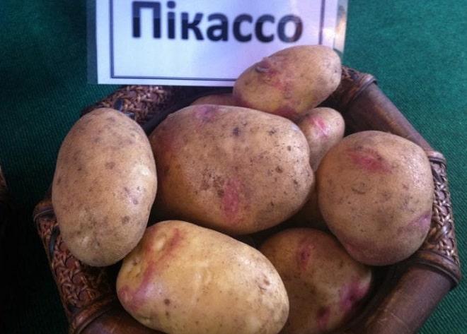 пикассо картофель