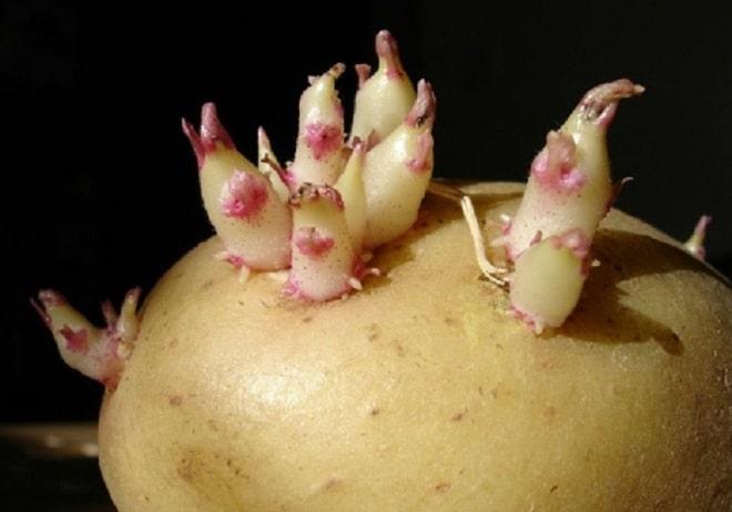 картофельное лекарство