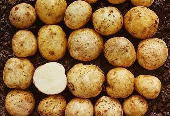 размер картофеля адретта