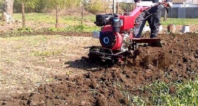 Как высаживать картофель под мотоблок