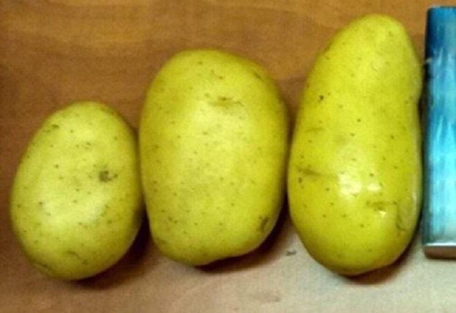 клубни картофеля зекура