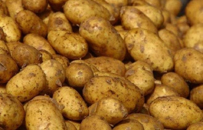 Картофель в бурту