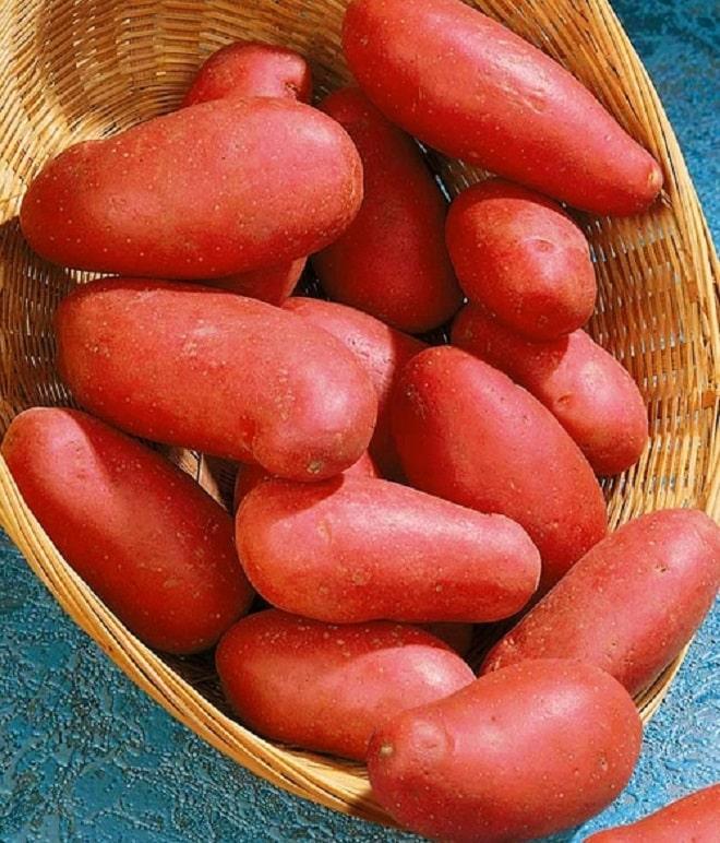 бордовый картофель