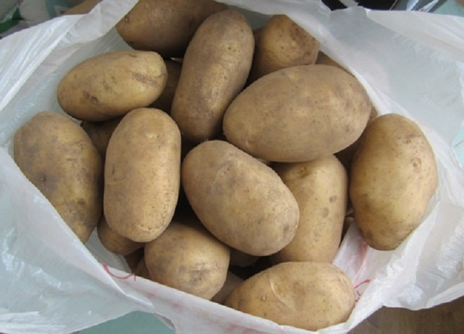клубни картофеля колобок
