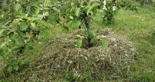 подкормка деревьев ботвой