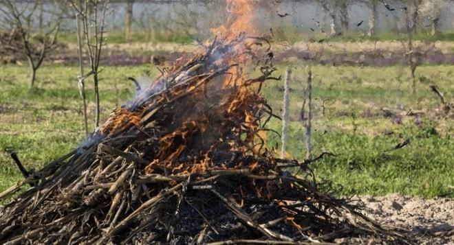 сжигание ботвы