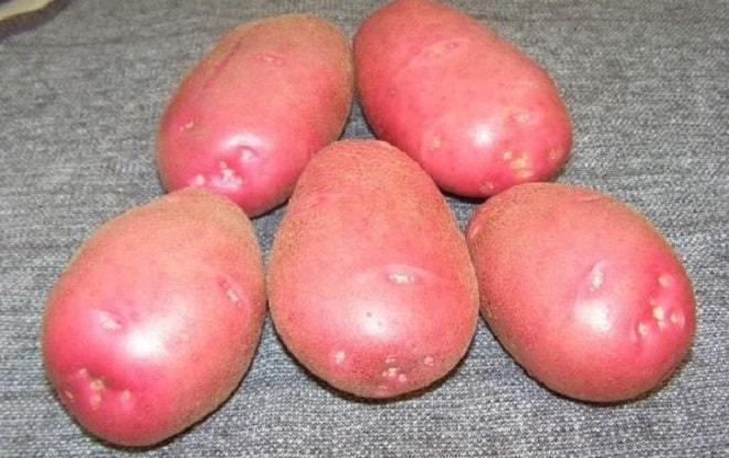 розвый картофель