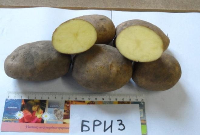 бриз картофель